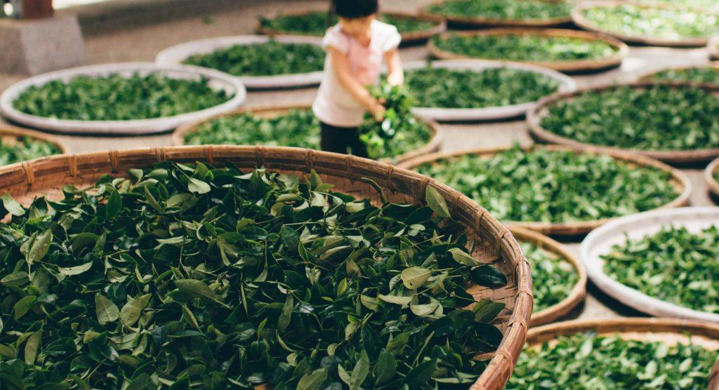 Brief History of Tea Mayfair Tea
