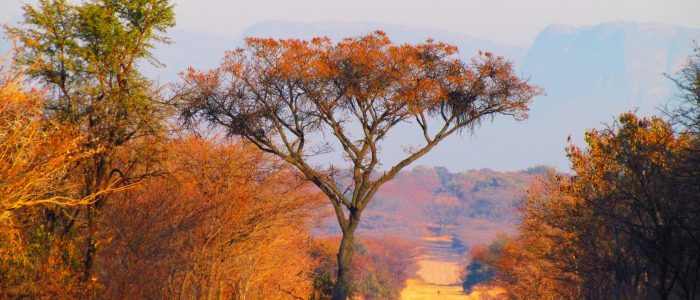 South Africa Honebush Savanna